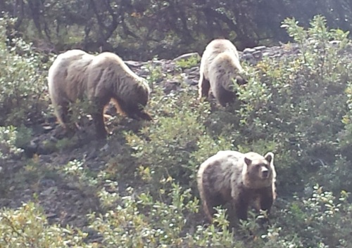 We saw grizzly bears in Denali National Park 15 years after my first cancer diagnosis.
